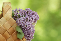 Lilac flowers in birchbark basket Royalty Free Stock Images