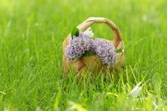 Lilac flowers in birchbark basket on grass Stock Photography