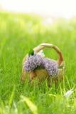 Lilac flowers in birchbark basket on grass Stock Photos