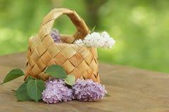 Lilac flowers in birchbark basket on table Royalty Free Stock Photo