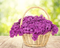 Lilac Flowers Blooming Bouquet Basket Wooden Table Stock Images