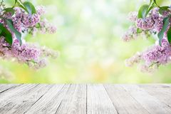 Lilac flowers blossom background Stock Photo