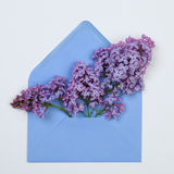Lilac  flowers in a blue envelope on white Stock Image