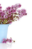 Lilac flowers in blue pail. Closeup of Lilac flowers in blue pail royalty free stock photo