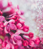 Lilac flowers on blurred brilliant background. Shallow depth of field Stock Photos