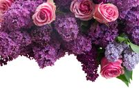 Lilac flowers. Border of violet Lilac flowers with pink roses isolated on white background Stock Photos