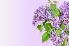 Lilac flowers bouquet Stock Image