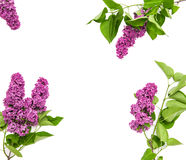Lilac flowers bouquet. Spring blossoms. Flat lay Stock Photography