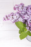 Lilac flowers Royalty Free Stock Photo