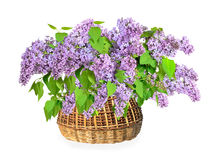 Lilac Flowers Bouquet in a wicker basket Royalty Free Stock Photos