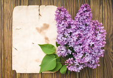 Lilac flowers branch with sample text Stock Images