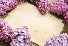 Lilac flowers branch with sample text Royalty Free Stock Photo