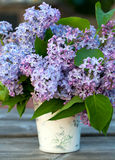 Lilac flowers in a bucket on garden table Stock Photography