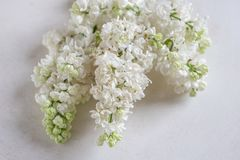 Lilac flowers bunch in a basket over blurred wood background. White Lilac flowers bunch in a basket over blurred wood background royalty free stock photography