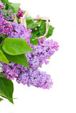 Lilac flowers Stock Images