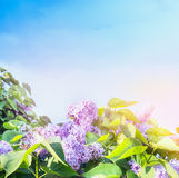 Lilac flowers bunch over sunny sky background Stock Photos