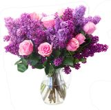 Lilac flowers. Bunch of purple Lilac flowers with pink roses in vase isolated on white background Stock Image