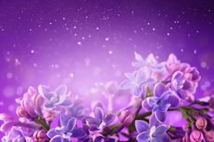 Lilac flowers bunch violet art design background. Beautiful violet Lilac flowers closeup. Watercolor nature floral backdrop stock photography