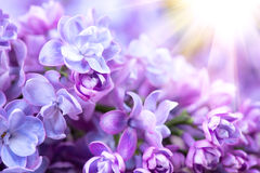 Lilac flowers bunch violet art design background Stock Photos