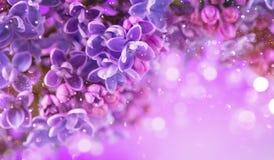 Lilac flowers bunch violet art design background. Beautiful violet Lilac flowers closeup. Watercolor nature floral backdrop stock photos