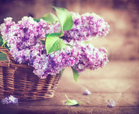 Lilac flowers bunch on white planks wood background Royalty Free Stock Image