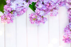 Lilac flowers bunch on white planks wood background Royalty Free Stock Photos