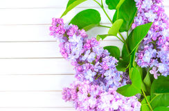 Lilac flowers bunch on white wooden background royalty free stock image
