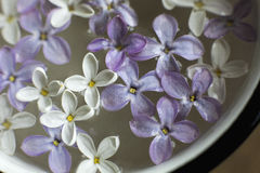 Lilac flowers close up. In water royalty free stock images