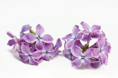 Lilac flowers closeup Royalty Free Stock Photo