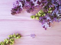 Lilac flowers composition color border vintage pink wooden spring beautiful. Lilac flowers spring wooden background blooming decoration design season arrangement stock photography