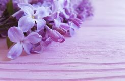 Lilac flowers composition macro color border vintage pink wooden spring beautiful. Lilac flowers macro spring wooden background blooming decoration design season stock photos
