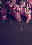 lilac flowers on a dark wooden background Stock Photo
