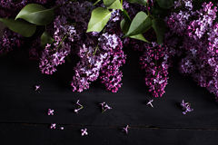 lilac flowers on a dark wooden background Stock Images