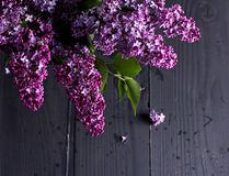 lilac flowers on a dark wooden background Royalty Free Stock Image