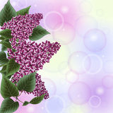 Lilac flowers decoration Stock Photography