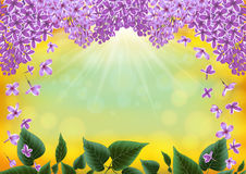 Lilac flowers decoration Royalty Free Stock Images