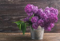 Lilac flowers in decorative tin bucket royalty free stock photos