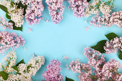 Lilac flowers frame Royalty Free Stock Photo