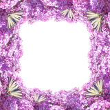 Lilac flowers frame stock images