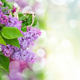 Lilac flowers in garden Stock Photos