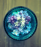 Lilac flowers in glass. Stock Images