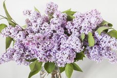Lilac flowers in glass vase Royalty Free Stock Image