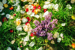 Lilac flowers on the grass with petals Stock Photos