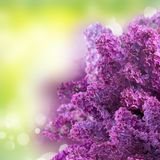 Lilac flowers on green Royalty Free Stock Images