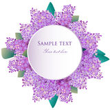 Lilac flowers greeting card, invitation. Vector Illustration Stock Photo
