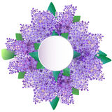 Lilac flowers greeting card, invitation. Vector Illustration Royalty Free Stock Photography