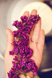 Lilac flowers in hand. On vinyl record background Royalty Free Stock Photos