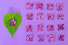 Lilac flowers and heart shaped leaf Stock Photography