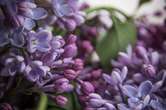 Lilac flowers in jars on the wooden window sill.  Royalty Free Stock Photo