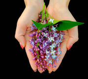 Lilac. Flowers with leaves in female hands on a black background Stock Photo